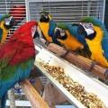 Fresh and Fertile Parrot Eggs for Sale
