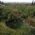 Land Kadmous
